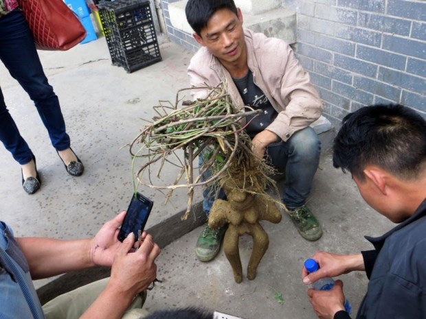 Man peddles human-shaped root in street