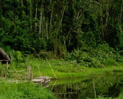 Parque nacional manu