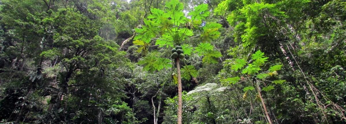 tarapoto rainforest san martin region