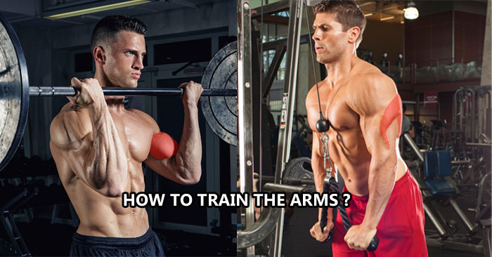 How to train the arms ?