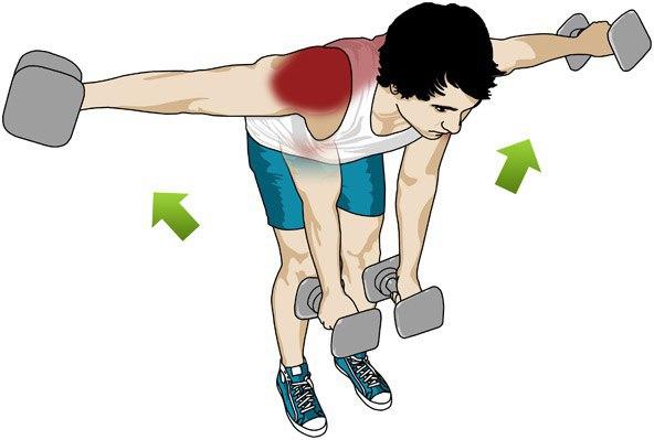 Exercises For The Deltoid Muscles Shramkievua