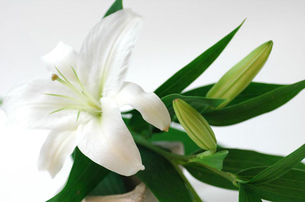 7 Ways To Give Lily As A Gift With Meaning