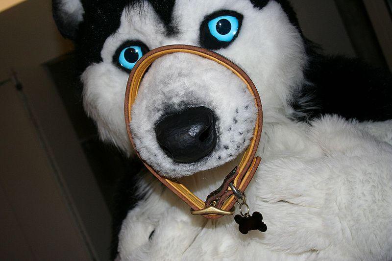 Siku Husky WikiFur The Furry Encyclopedia