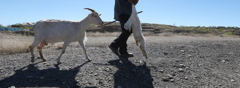 defensores ambientales en Sonora