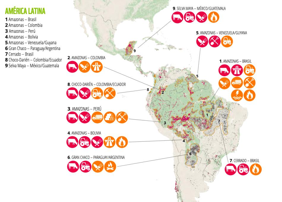 deforestación México WWF