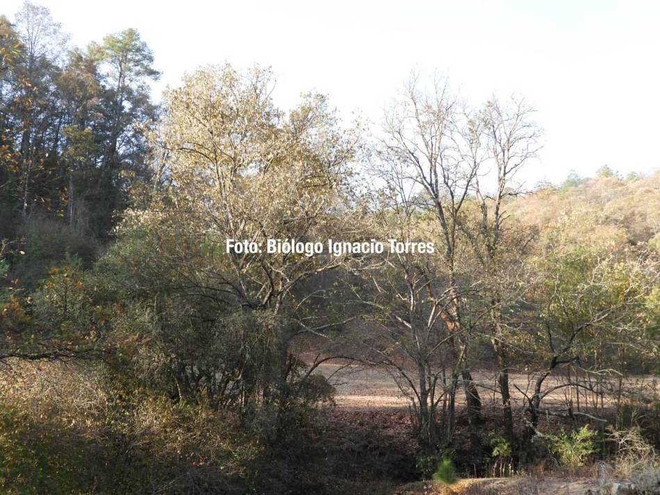 Flora y fauna Río Bello
