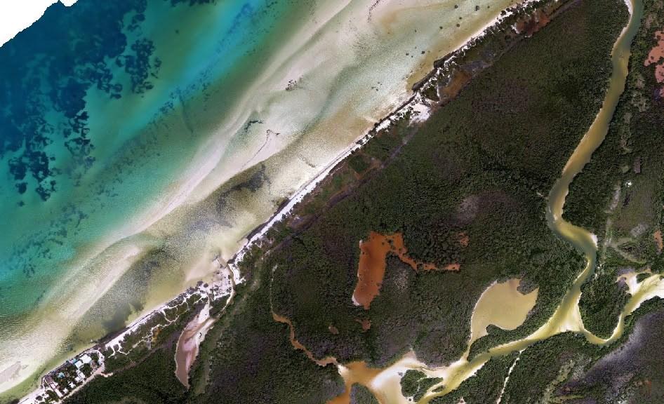 ala de manglar Isla Holbox