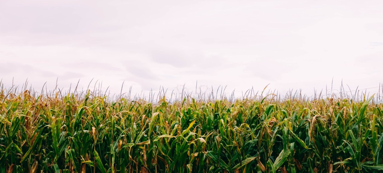 manejo agroecológico de plagas