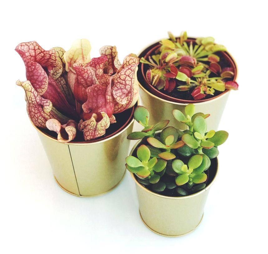 Imagen de Plantas Carnívoras y Suculenta