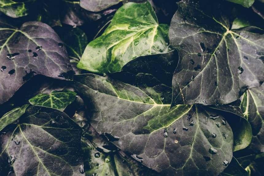 Imagen de hojas mojadas