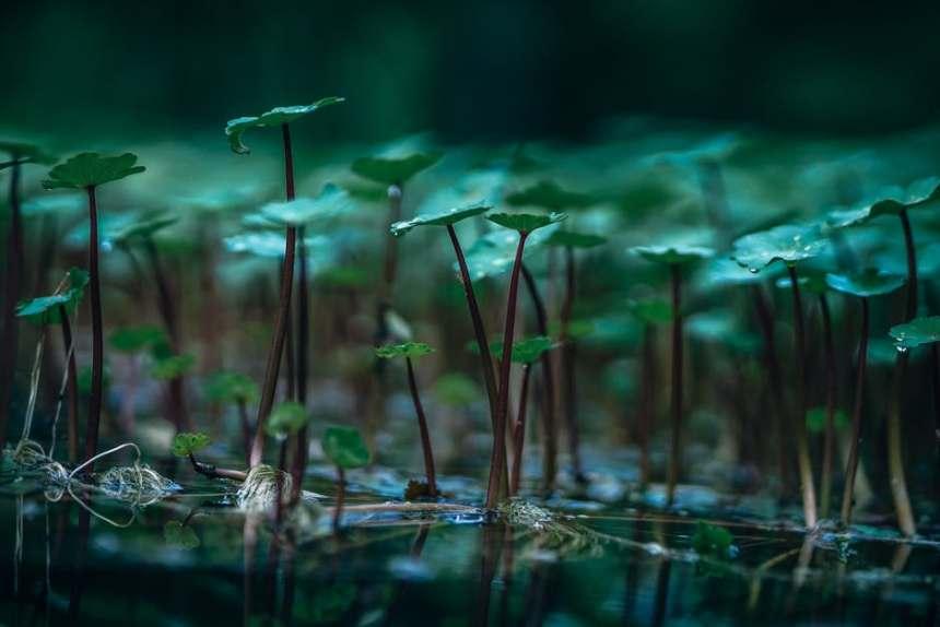 Plantas sobre agua
