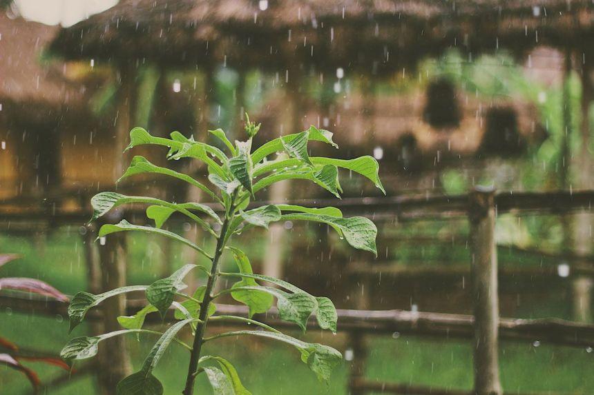 Lluvia sobre planta