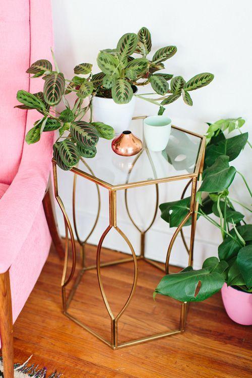 Imagen de Maranta Planta de interior sobre mesilla
