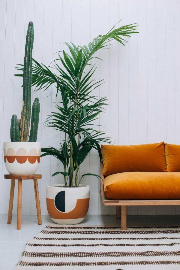 Planta de interior Areca