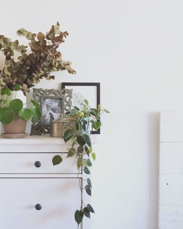 Ejemplo de Decoración con plantas