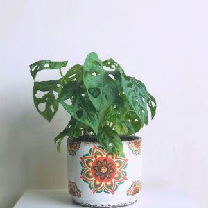 Maceta cerámica estampada con monstera adansonii