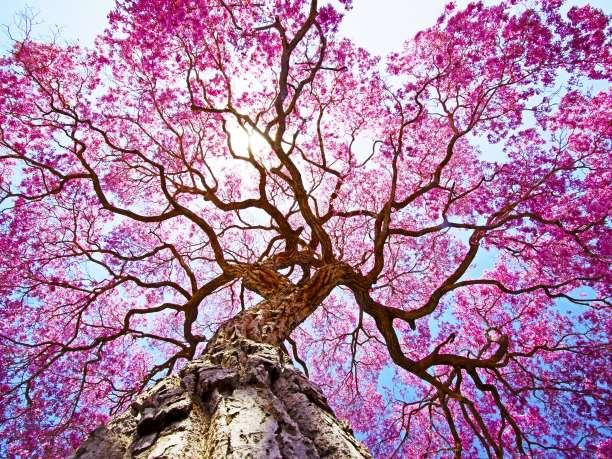 δέντρο άνθη λουλούδια
