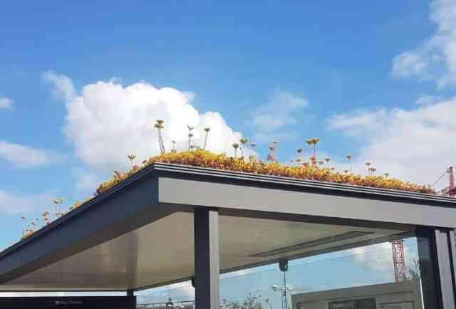 Η Ολλανδία καλύπτει τις στάσεις λεωφορείου με εκατοντάδες φυτά ως δώρο προς τις μέλισσες