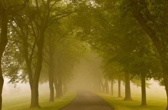 δέντρα τοπίο δρόμος άγνωστο μονοπάτι
