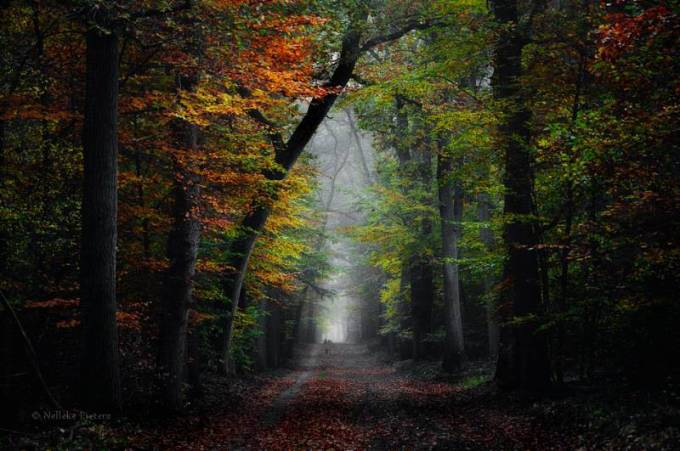 Forest Photography - Beautiful Photos of Woods in the Netherlands 28