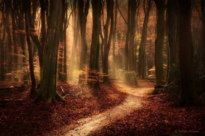 Forest Photography - Beautiful Photos of Woods in the Netherlands 9