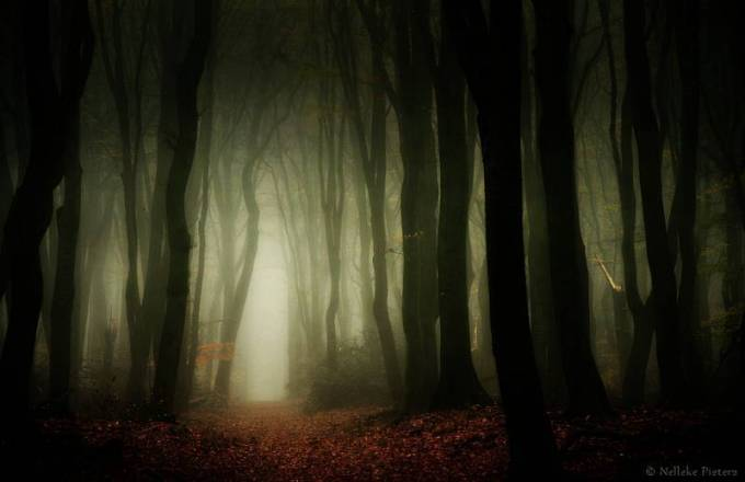 Forest Photography - Beautiful Photos of Woods in the Netherlands 10