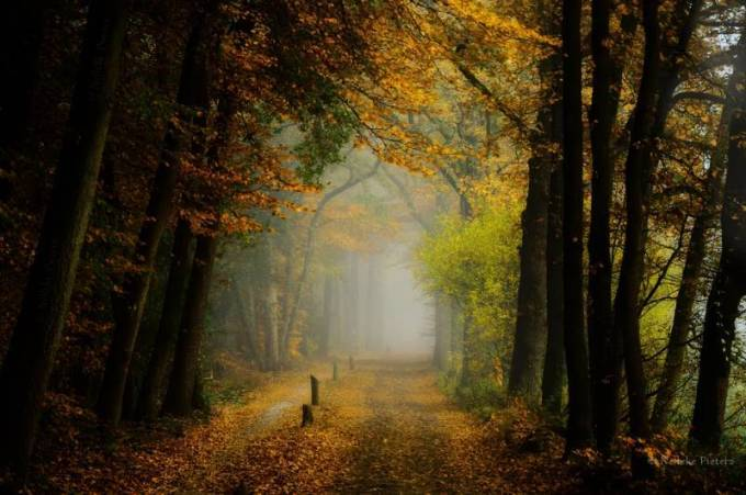 Forest Photography - Beautiful Photos of Woods in the Netherlands 22