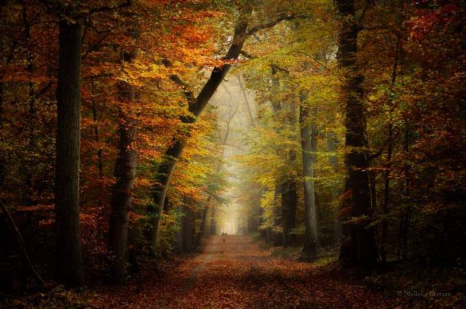 Forest Photography - Beautiful Photos of Woods in the Netherlands 23