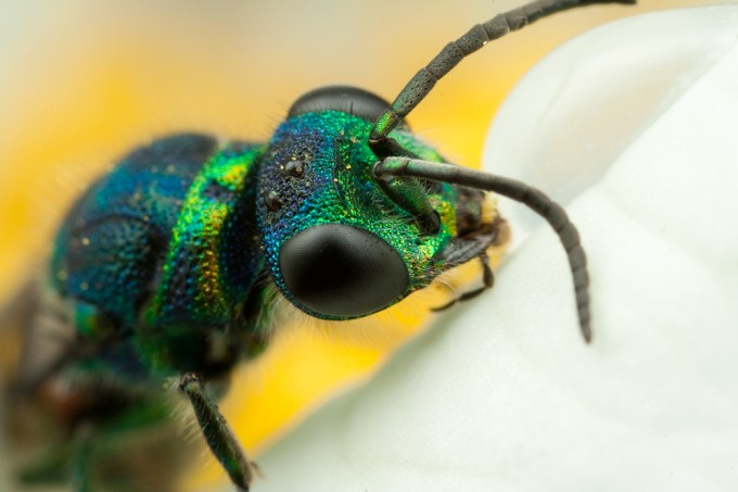 Macro Photography by Alistair Campbell-11