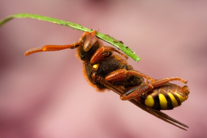 Macro Photography by Alistair Campbell-17
