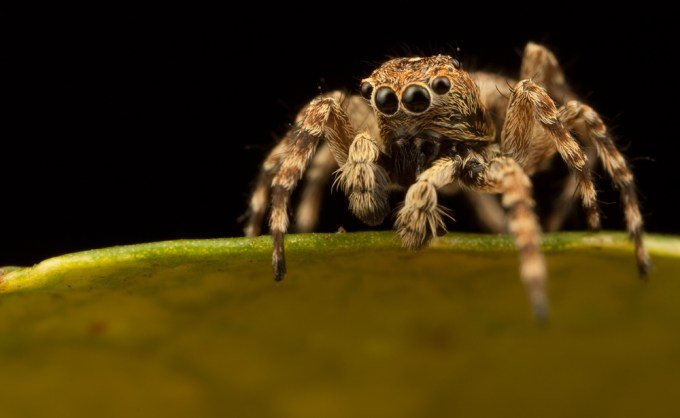 Macro Photography by Alistair Campbell-22
