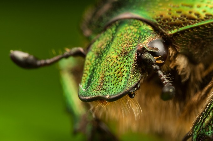 Macro Photography by Alistair Campbell-4
