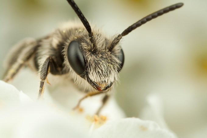 Macro Photography by Alistair Campbell-5