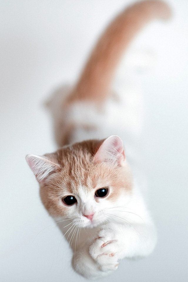 The most lovely cat-wallpaper