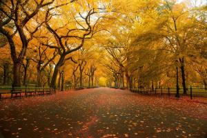 13 Most Beautiful and Popular Trees Around The World 13