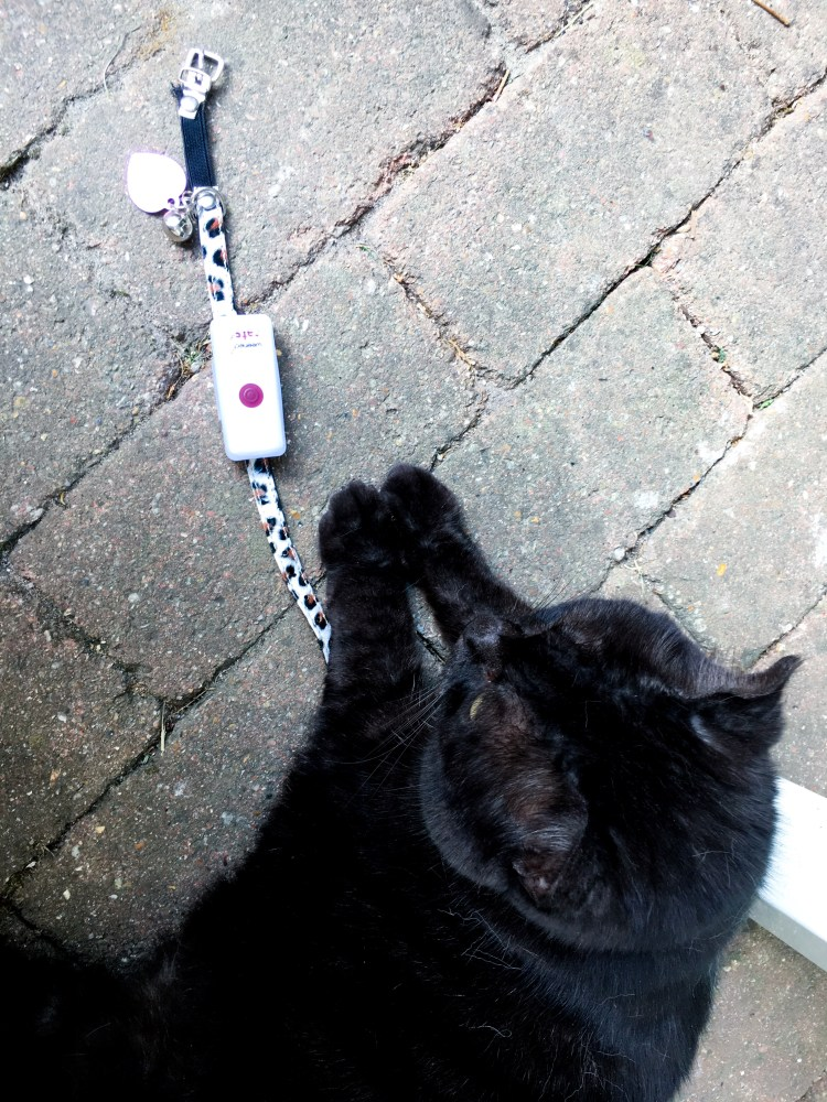 balise gps chat collier weenect