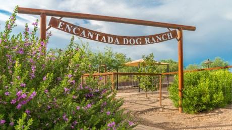 Steam Pump Dog Ranch 6