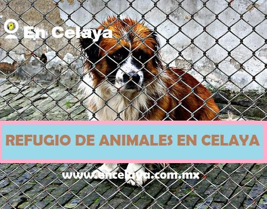 Refugio de Animales en Celaya