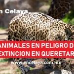 Animales en Peligro de Extincion en Queretaro