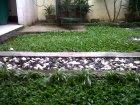 after rain grass