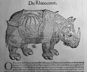 145. MÜNSTER. La cosmographie universelle. [Bâle, Henry Pierre, 1556]. Rhinocéros