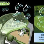 Detalle del sistema de la hoja del Saic Leaf