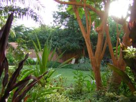 AFTER: looking toward the mangoes