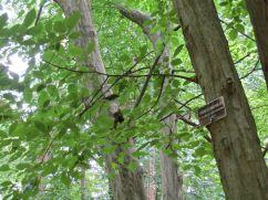 Native tree.