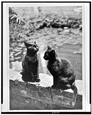 Johnston's cats, Hermin and Vermin, seated on the brick railing of her New Orleans house.
