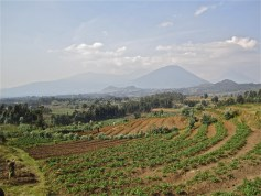 As we climbed through potato fields to the edge of the park, we could look back on the volcanoes where Dian Fossey did her research.
