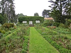 The formal borders and the house, covered in creeping fig.