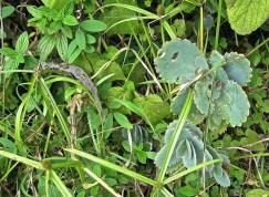 Sedum and grass.