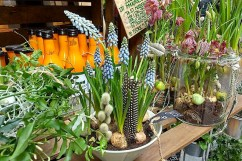 Inside the food hall, grape muscari with feathers and pussy willow.
