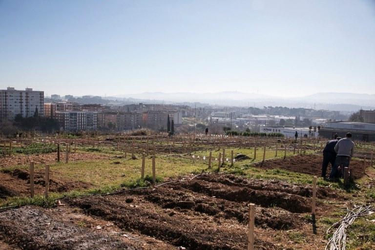 L'Ajuntament fa públic l'esborrany del reglament d'ús dels horts de titularitat municipal